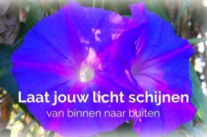 bloem van licht
